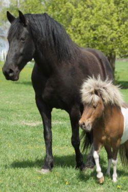 Катание на пони и лошадях