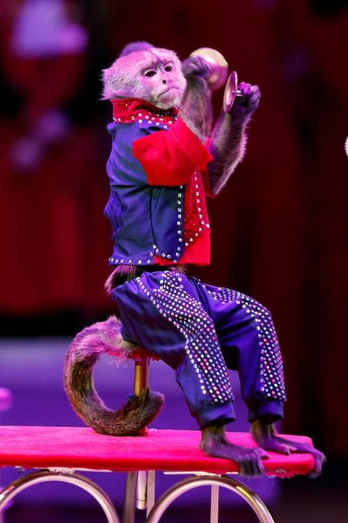 Шоу дрессированных обезьянок